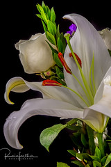 12153629 (rainfeatherphotography) Tags: flower fauna white lily