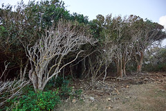 Dune (theplouaxe) Tags: guadeloupe voyage travel landscape paysage antilles pear beach tree
