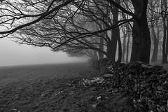 Horseshoe Plantation (l4ts) Tags: landscape derbyshire peakdistrict whitepeak newhaven horseshoeplantation trees mist blackwhite mono drystonewall