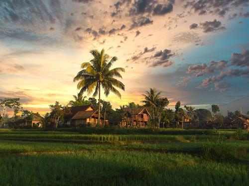 Rizières de Lombok