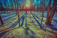 _DSC2679 Sturgeon Creek Winter Shadows (Charles Bonham) Tags: winter shadows warm cool sun colorcontrast longshadows sturgeoncreek trees snow sonya7rll sonyzeissfe1635mmf4 charlesbonhamphotography