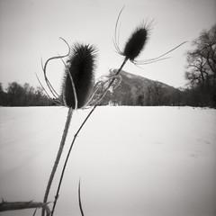 A Distant Barn (picmeups) Tags: film blackandwhite bw monochrome zeroimage zero2000 f138 ilford delta100 pinhole rodinal nature cold winter 6x6 72f 150 snow 120 square