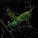 Luminescent Grasshopper