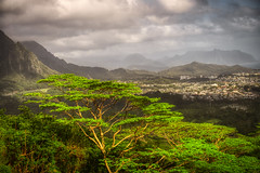 Pali Lookout- HDR (dgoldenberg52) Tags: pali lookout hawaii oahu hdr high dynamic range view mountains