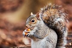 D04_3585 (drkotaku) Tags: centralpark centralparknorth manhattan newyorkcity nikon nikond4 parkphotography photography nikonafsnikkor200500mmf56eedvr squirrel