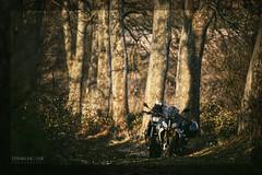 🌳 A path in the forest. BMW R1200RS, Tiriez-Albacete (ES) Febrero 15 de 2020 (EFRAIN A. JACOME Q.) Tags: r1200rs viajar viaje travel albacete españa moorroad bmw bike fotografía retrato portrait photograpy jácome efraín moto atardecer sunset bosque forest