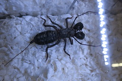 Exotic Insect (shaire productions) Tags: creature nature photo imagery insect arachnid bug exotic