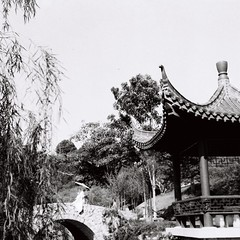 Chinese garden (bdrc1989) Tags: asdgraphy film 6x6 agfa isolette agnar 85mm f45 classic analog analogue old relic square format blackandwhite black white monochrome manual people candy portrait chinese garden nirvana semenyih