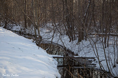 Stream crossing for acrobats (Dmitri Zoubov) Tags: snow winter park outdoor forest wood stream river