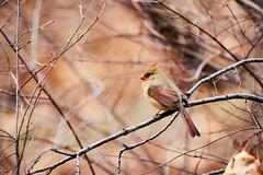 D04_3603 (drkotaku) Tags: centralpark centralparknorth manhattan newyorkcity nikon nikond4 parkphotography photography nikonafsnikkor200500mmf56eedvr birdphotography bird