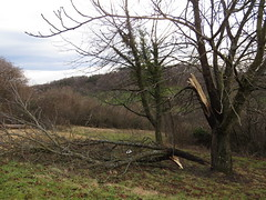 "Nach ""Sabine"" / after storm ""Sabine"" (thobern1) Tags: storm sturm sabine"