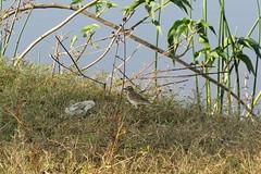 IMG_4635 (mohandep) Tags: flowers sun scenery kanakapuraroad lakes mavathur birding nature plants signs humour wildlife food ugs