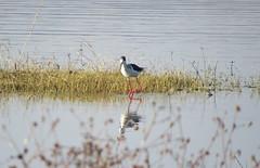 IMG_4631 (mohandep) Tags: flowers sun scenery kanakapuraroad lakes mavathur birding nature plants signs humour wildlife food ugs