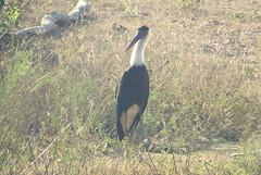 IMG_4627 (mohandep) Tags: flowers sun scenery kanakapuraroad lakes mavathur birding nature plants signs humour wildlife food ugs