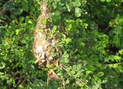 IMG_4625 (mohandep) Tags: flowers sun scenery kanakapuraroad lakes mavathur birding nature plants signs humour wildlife food ugs
