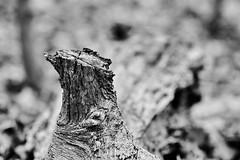 D04_3456 (drkotaku) Tags: blackandwhitephotography blackandwhite centralparknorth centralpark parkphotography photography nikond4 nikonafsnikkor200500mmf56eedvr