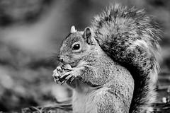D04_3586 (drkotaku) Tags: blackandwhitephotography blackandwhite centralparknorth centralpark parkphotography photography nikond4 nikonafsnikkor200500mmf56eedvr