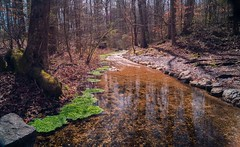 Watercress & Stream (WinterEC) Tags: redclay spring historic tennessee creek cherokee