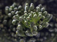 Broccolini (Bec_Viewpoint) Tags: vegetables macro mondays macromondays