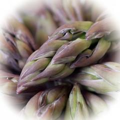 Asparagus tips. (karl from perivale) Tags: asparagustips vegetables plant food organic macromondays macromonday hmm macro green