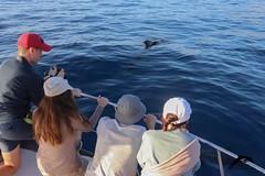pilot-whales-oceanexplorer La Palma (OceanExplorer La Palma) Tags: commondolphin delphinusdelphis dolphinjumping lapalma laislabonita whalewatching ecotourism picoftheday oceanlovers cetaceans canaryislands savetheoceans blueplanet wildlife nature wildlifephotography marinemammals biodiversity lapalmalover lapalmaisland responsiblewhalewatching oceanconservation