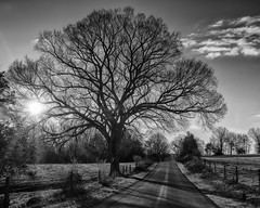 Sunrise in Tree (Vincent1825) Tags: 55mm blackandwhite sunrise landscape pentax