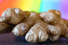 Ginger (Laurent Barrez) Tags: ginger gingembre vegetable macro mondays vegetables