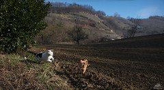 Action On The Higher Field ;-) (Xena*best friend*) Tags: richardgere rg britney bs laurusnobilis winterwithoutsnow cats whiskers feline katzen gatto gato chats furry fur pussycat feral tiger pets kittens kitty animals piedmontitaly piemonte canoneos760d italy wood woods wildanimals wild paws calico markings purr digitalrebelt6s canonefs18135mmf3556isstm flickr outdoor animal pet photo nature catlover