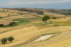 Rural landscape near Serracapriola, Apulia, Italy (clodio61) Tags: apulia europe foggia italy puglia serracapriola southern agriculture color country day field green hill land landscape meadow nature olive outdoor photography plant road rural scenic summer sunny tree