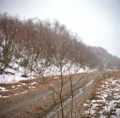 Snowing a bit (egorkom1798) Tags: film mediumformat kiev60 kodakportra160 volna3v c41