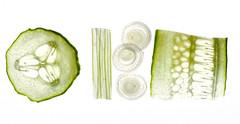 vegetables (skloi) Tags: gemüse vegetables green grün salat salad durchlicht backlit white macromondays highkey