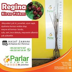 Parlar-REGİNAKİRAZFAİDANI (parlarfidancilik) Tags: kiraz kirazfidanı parlarfidan fidansiparis fidancılık fidansepeti fidansipariş sapling agriculture cherry cherrysapling regina