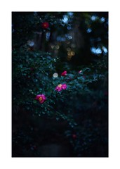 This work is 13/18 works taken on 2020/1/5 (shin ikegami) Tags: sony ilce7m2 a7ii sonycamera 50mm lomography lomoartlens newjupiter3 tokyo 単焦点 iso800 ndfilter light shadow 自然 nature naturephotography 玉ボケ bokeh depthoffield art artphotography japan earth asia portrait portraitphotography