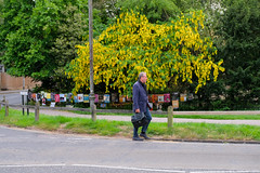 Queen's Road (Sir Cam @camdiary) Tags: cambridge cambridgeuniversity camdiary street blossom bag
