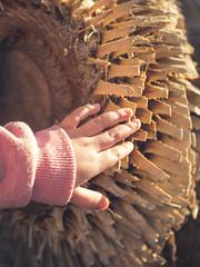 P1210846 (Trude Graz) Tags: blumenundpflanzen botanischergarten graz hands