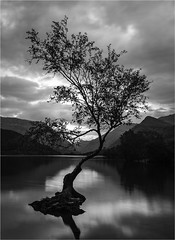 Llyn Padarn in mono (Charles Connor) Tags: longexposure llynpadarn northwales snowdonia monochromelandscape monochrome blackandwhite lonetree nature naturephotography contrast charlesconnor canondslr