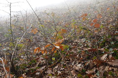 Forêt des Machurettes @ Épagny Metz-Tessy