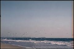 703 (konophotography) Tags: konophotography konophoto film filmisnotdead filmphotography analog analogue nature sea birds india buyfilmnotmegapixels ishootfilm sky 2017 expired