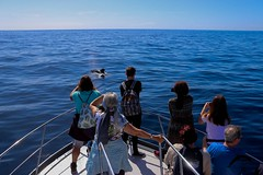 pilot-whale-oceanexplorer La Palma (OceanExplorer La Palma) Tags: commondolphin delphinusdelphis dolphinjumping lapalma laislabonita whalewatching ecotourism picoftheday oceanlovers cetaceans canaryislands savetheoceans blueplanet wildlife nature wildlifephotography marinemammals biodiversity lapalmalover lapalmaisland responsiblewhalewatching oceanconservation
