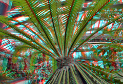 Tropenkas Victoriaserre Blijdorp Zoo Rotterdam 3D (wim hoppenbrouwers) Tags: tropenkas victoriaserre blijdorp zoo rotterdam 3d anaglyph stereo redcyan