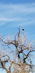 February 16, 2020 - A bald eagle on high. (Andrea Ernst)