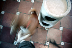 051297 12 (ndpa / s. lundeen, archivist) Tags: dewolf nickdewolf photographbynickdewolf color film 1997 1990s may spring aspen colorado dewolfhome animal pet dog basenji kitchen floor tile nicksknee blurry outoffocus movement motion westend