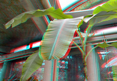 Tropenkas Victoriaserre Blijdorp Zoo Rotterdam 3D (wim hoppenbrouwers) Tags: tropenkas victoriaserre blijdorp zoo rotterdam 3d anaglyph stereo redcyan ttw d7000 chacha nikkor1224
