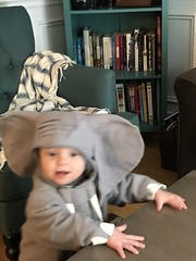 "Sam as an Elephant for Halloween • <a style=""font-size:0.8em;"" href=""http://www.flickr.com/photos/109120354@N07/49548037958/"" target=""_blank"">View on Flickr</a>"