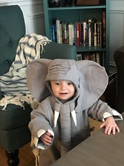 "Sam as an Elephant for Halloween • <a style=""font-size:0.8em;"" href=""http://www.flickr.com/photos/109120354@N07/49548038278/"" target=""_blank"">View on Flickr</a>"