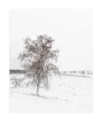 Once there was a winter in Holland (Rob Schop) Tags: nationaalparkmaasduinen winter snow tree solitary holland limburg 45 orton samyang12mmf20 f8 sonya6000 nofilters handheld archive