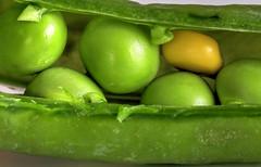 PISELLI NEL BACCELLO. PEAS IN THE POD. (FRANCO600D) Tags: vegetables hmm macromondays vegetablepea gemüseerbse poisauxlégumes baccello nacelle schote pod uglyduckling hässlichesentlein vilainpetitcanard diverso patitofeo sfera verde green vert grün hülsenfrucht légumineuse legumbre macro macrofotografia esfera sphère kugel ball buccia peel schälen peler canon eos6dmarkii 6dmarkii canoneos6dmarkii canon6dmarkii franco600d