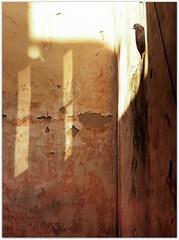 Dove (Ігор Кириловський) Tags: c41 135 35mm кириловскийигорь кириловськийігор kirilovskiigor kyrylovskyy chernivtsi tschernowitz ukraine slr minoltadynax404si minolta maxxum film kodakcolorplus200 kodakdukatstudiolab af85mmf14grs schneiderbwuvfpro dove