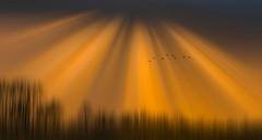 Solitude 719 (Wim Koopman) Tags: light rays divine birds geese flight flying motion glowing flowing flowingandglowing