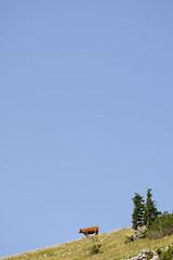 Bored (CoolMcFlash) Tags: animal cow sky blue nature mountain negativespace copyspace simplicity minimalistic minimalism minimalistisch green fujifilm xt2 tree tier kuh himmel blau natur berg hill grün baum fotografie photography xf18135mmf3556r lm ois wr grass